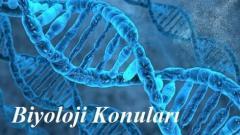 2018 YKS Biyoloji Konuları ve Soru Dağılımı (ÖSYM-YÖK-MEB)