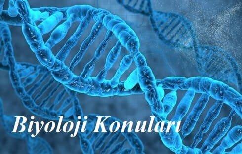 2020 YKS AYT Biyoloji Konuları ve Soru Dağılımı(ÖSYM-YÖK-MEB)